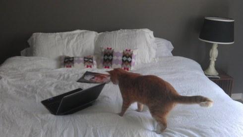 kittyon bed